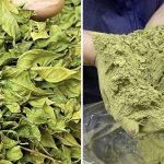 生産者さんが畑から拘り栽培・収穫・製造された【純国産天然100%沖縄産美らヘナ®︎】手間がかかっています。
